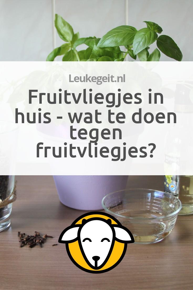 Fruitvliegjes in huis wat te doen tegen fruitvliegjes for Fruitvliegjes in keuken