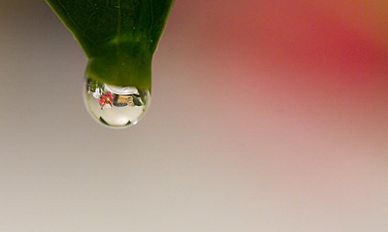 Sneller en milieuvriendelijker schoonmaken met een plantenspuit