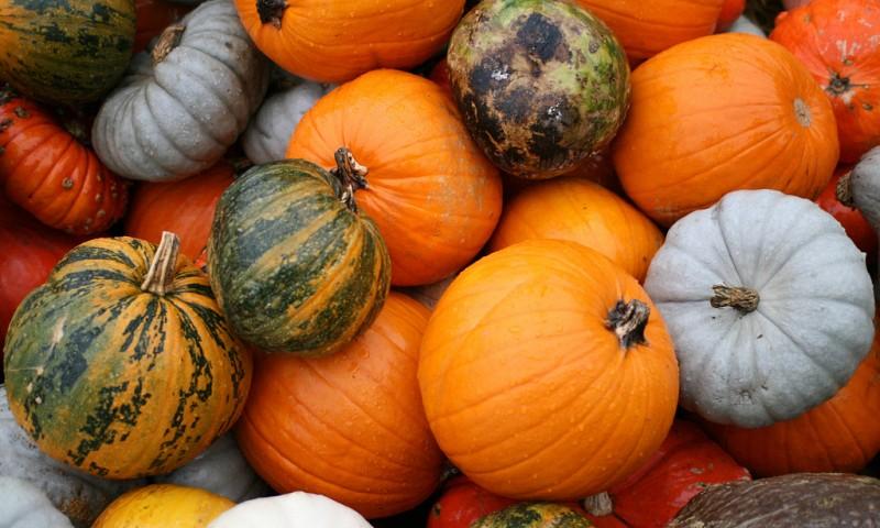 De seizoensgroenten van september