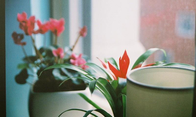 Verzorging van je kamerplanten – Waarom gaan mijn planten altijd dood?