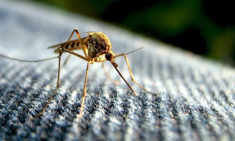 Muggenbeten voorkomen – wat te doen tegen muggen?