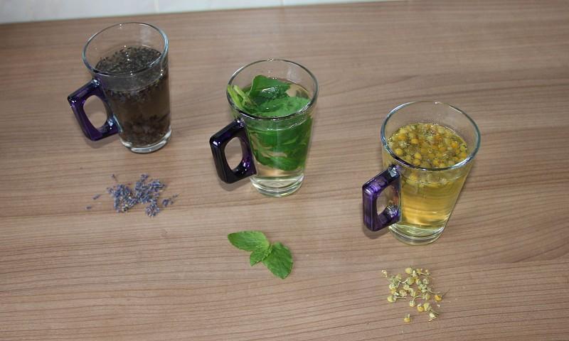 Zelf thee kweken – Zo begin je thuis je eigen mini thee kwekerij