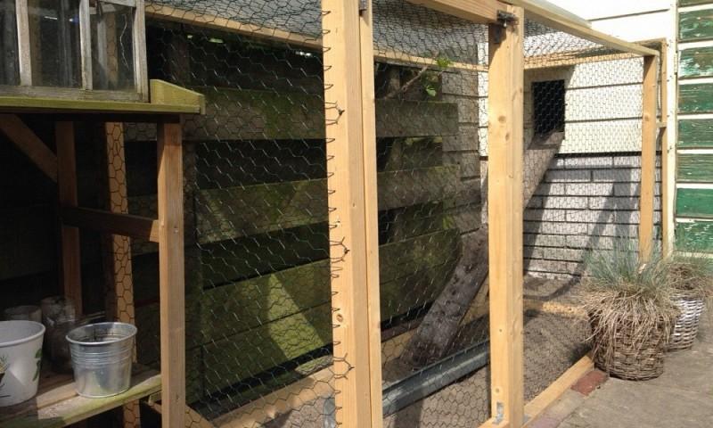Kippenhok maken – zo maak je je eigen kippenpaleis
