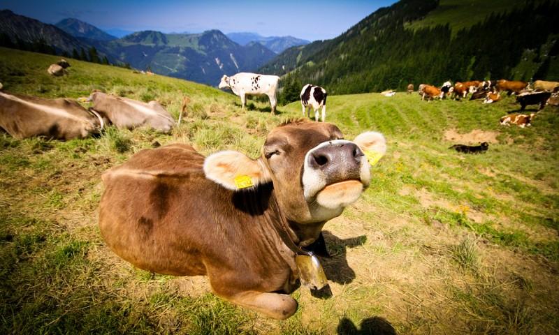 4 tips om diervriendelijker te leven