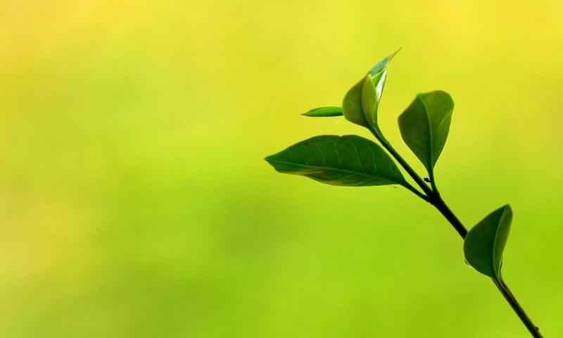 Meer groen in huis halen – waarom kamerplanten zo gezond zijn