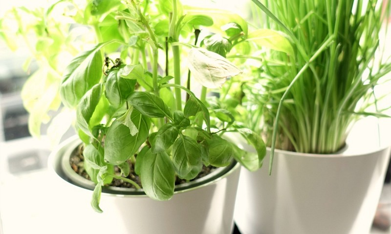 Je kruidenplanten niet meer vroegtijdig laten sterven