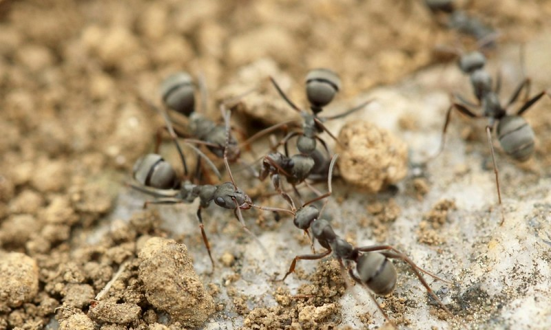 Mieren in huis bestrijden – handige tips om mieren te verwijderen