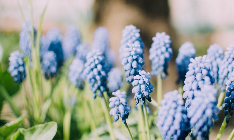 Stappenplan om je tuin of terras zomerklaar te maken