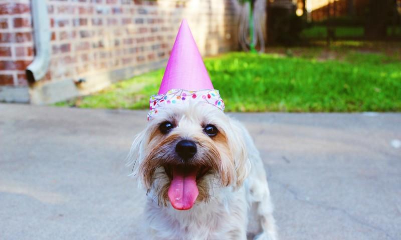Verjaardag goedkoop vieren – 5 budget tips