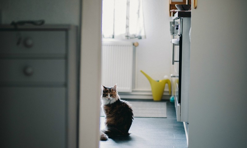 Minimaliseren in de keuken – hoeveel apparaten heb je nodig?