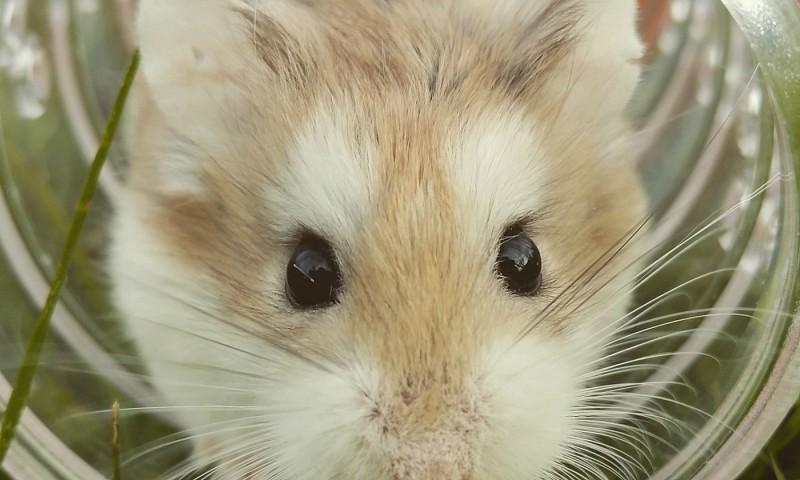muizen en ander ongedierte in huis voorkomen - stofzuigerzen, Gartenarbeit ideen