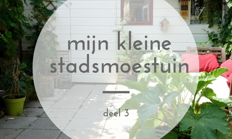 Mini moestuin in de stad – deel 3