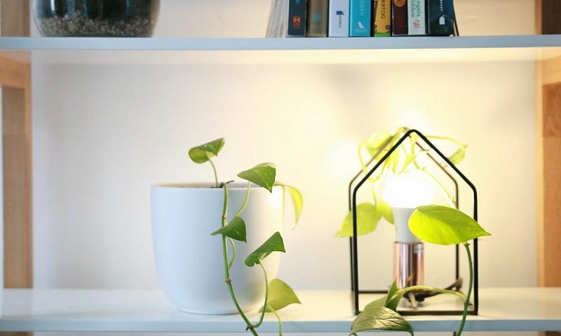 7 luchtzuiverende planten