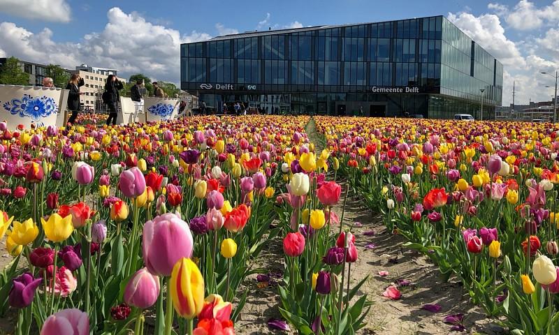Maandoverzicht mei – 12,5 jaar samen én een mooi tulpenveld