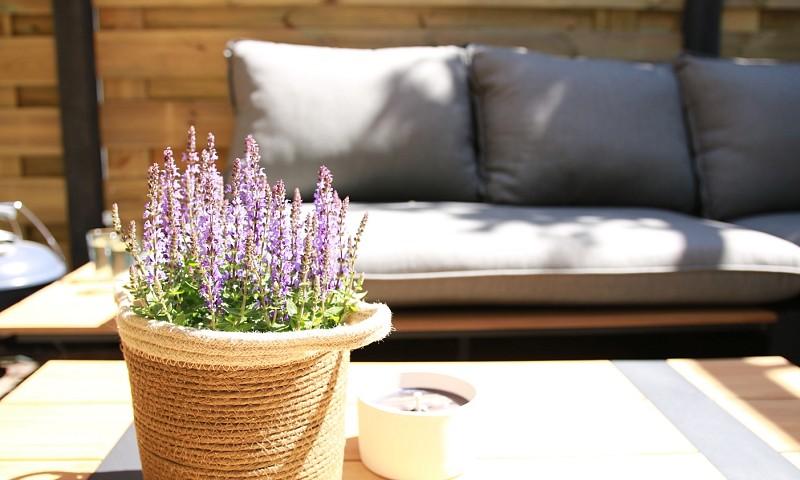 Mijn tips voor het opknappen van je tuin (+foto's van onze tuin)