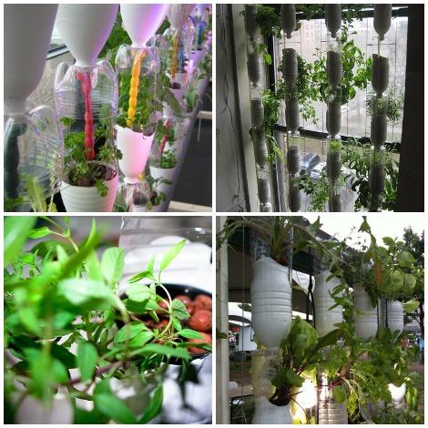 Window Farm collectie