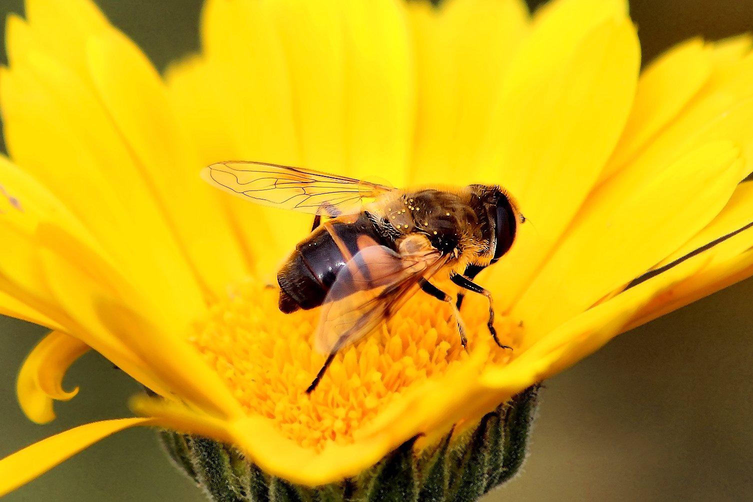 Citaten Over Bijen : Bijen in de natuur waarom het redden van