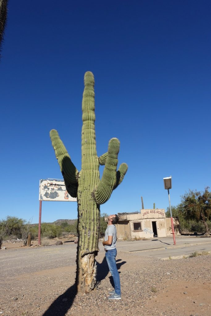 cactus in Phoenix, USA