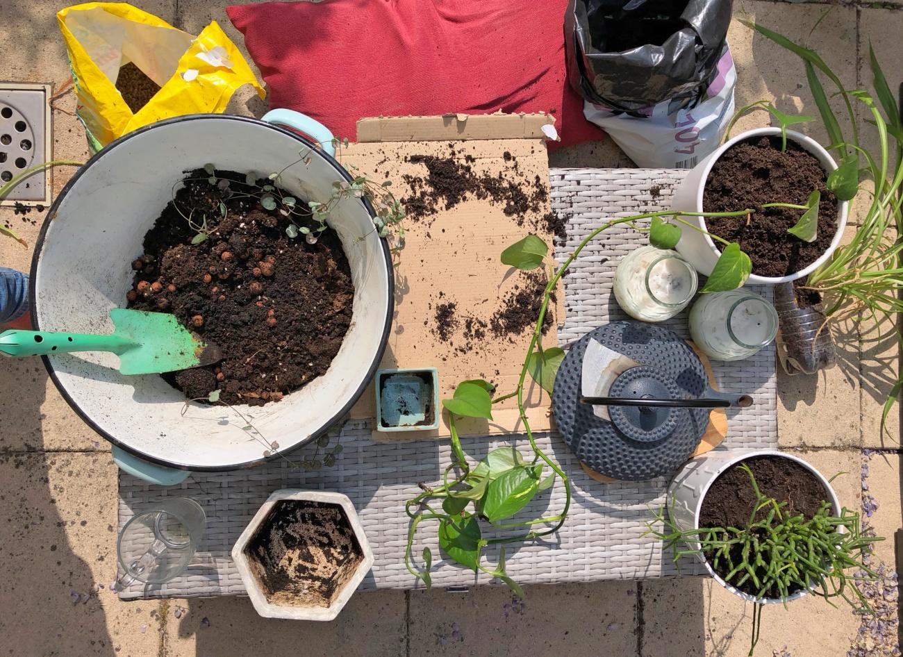 Rouwvliegjes Bestrijden In Planten Weg Met Die Zwarte Vliegjes