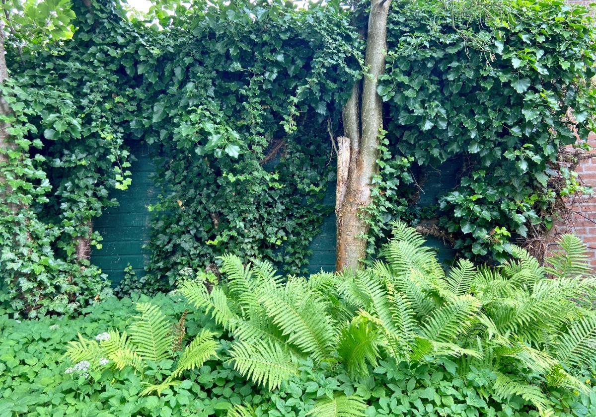 Stukje urban jungle in onze tuin.